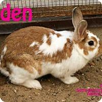 Adopt A Pet :: EDEN - Santa Maria, CA