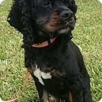 Adopt A Pet :: Micah - Sugarland, TX