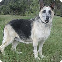 Adopt A Pet :: Pandella - Ridgway, CO