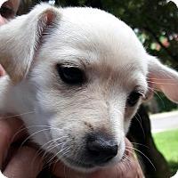 Adopt A Pet :: Happy - Salem, OR