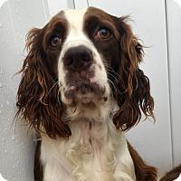 Adopt A Pet :: Cadence - Green Bay, WI