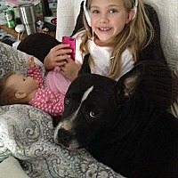 Adopt A Pet :: Bonnie - Staunton, VA