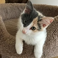Adopt A Pet :: Lycee - Lovingston, VA