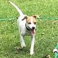 Adopt A Pet :: Yankee - Houston, TX