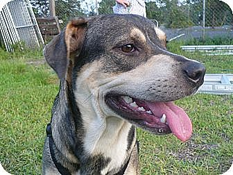 Shepherd (Unknown Type) Mix Dog for adoption in Graceville, Florida - Sparkle