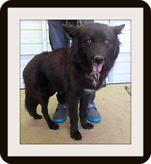 Husky Mix Dog for adoption in Woodlyn, Pennsylvania - Oliva
