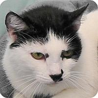 Adopt A Pet :: Sonny - Redondo Beach, CA