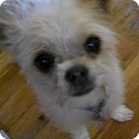 Adopt A Pet :: Oliver - dewey, AZ
