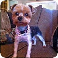 Adopt A Pet :: Harper - Fairfax, VA