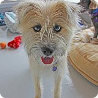 Adopt A Pet :: Penny - Burbank, CA