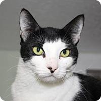 Adopt A Pet :: Gibson - Venice, FL