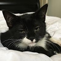 Adopt A Pet :: TaterTot - Carlisle, PA