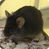 Adopt A Pet :: Mercury - Benbrook, TX