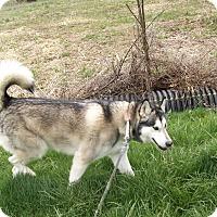 Adopt A Pet :: Mandy - Augusta County, VA