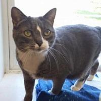Adopt A Pet :: Lily - Attica, NY