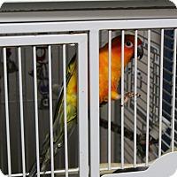 Adopt A Pet :: Tweety - Punta Gorda, FL