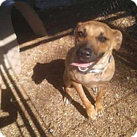 Adopt A Pet :: Marley - Foristell, MO