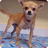 Adopt A Pet :: Geoffrey - 5 lbs - Dahlgren, VA