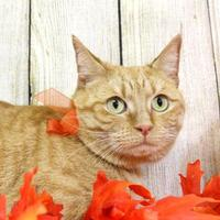 Adopt A Pet :: Fanta - Harrisonburg, VA