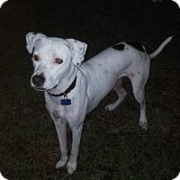 Adopt A Pet :: Jax - Sarasota, FL