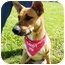 Photo 4 - Shepherd (Unknown Type) Mix Dog for adoption in Detroit, Michigan - Mia-Adopted!