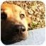 Photo 1 - Shepherd (Unknown Type)/Golden Retriever Mix Dog for adoption in Grafton, Ohio - Winny!