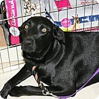 Adopt A Pet :: Missy - Grand Rapids, MI