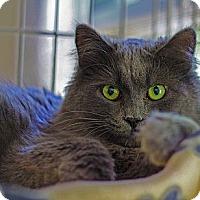 Adopt A Pet :: Nala - Lombard, IL