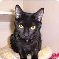 Adopt A Pet :: Giada - Lombard, IL