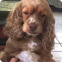 Adopt A Pet :: Fiona - Sugarland, TX
