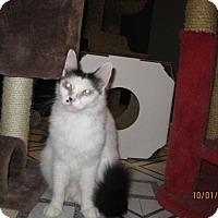 Adopt A Pet :: Bree - Glendale, AZ