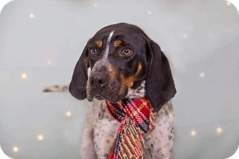 Bluetick Coonhound Mix Dog for adoption in Flint, Michigan - Jed