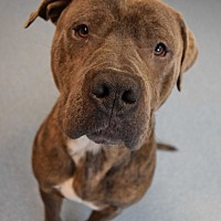 Adopt A Pet :: Jim - Bay Shore, NY
