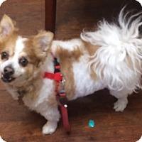 Adopt A Pet :: Chucky - Oak Ridge, NJ