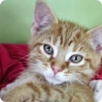 Adopt A Pet :: curious george - Muskegon, MI