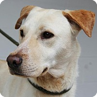 Adopt A Pet :: Claire - Harrisonburg, VA