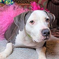 Adopt A Pet :: LULA - Memphis, TN