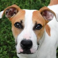 Adopt A Pet :: Street Car - Valley View, OH