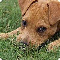 Adopt A Pet :: Tony - Minneapolis, MN