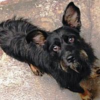 Adopt A Pet :: I'M ADOPTED Sebastian - Oswego, IL