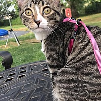 Adopt A Pet :: Dory - Smithtown, NY