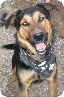 German Shepherd Dog Mix Dog for adoption in Cold Lake, Alberta - Adam