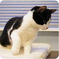 Adopt A Pet :: Shadow - Modesto, CA