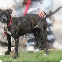 Adopt A Pet :: Lady - Yerington, NV
