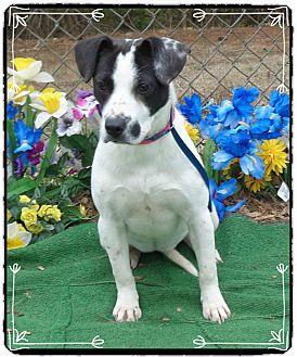 Pointer Mix Dog for adoption in Marietta, Georgia - HILDA