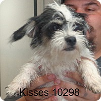 Adopt A Pet :: Kisses - Greencastle, NC
