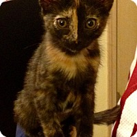 Adopt A Pet :: Etta Mae - Bentonville, AR