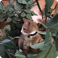 Adopt A Pet :: Hercules - Cranford/Rartian, NJ
