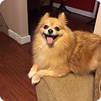 Adopt A Pet :: Teddy - Plainview, NY