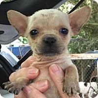 Adopt A Pet :: Glenda#4F - Orlando, FL